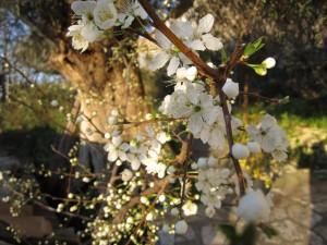 Greek spring, Lefkada 15.03.12